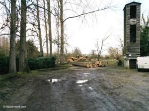 L'abattage des arbres vieillissant en cours